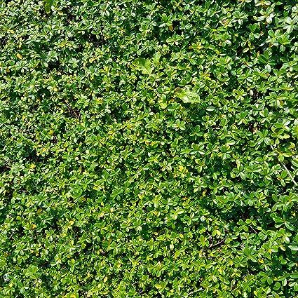 amazon com grass wall backdrop lawn green grass ground land