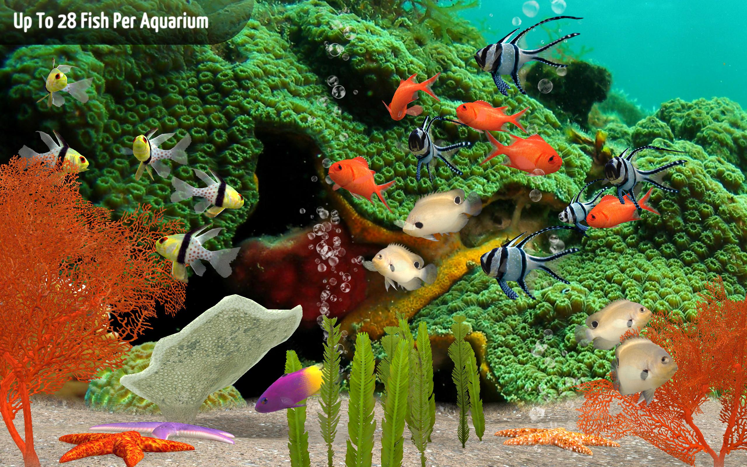 Fish aquarium olx delhi - Fish Aquarium Olx Delhi