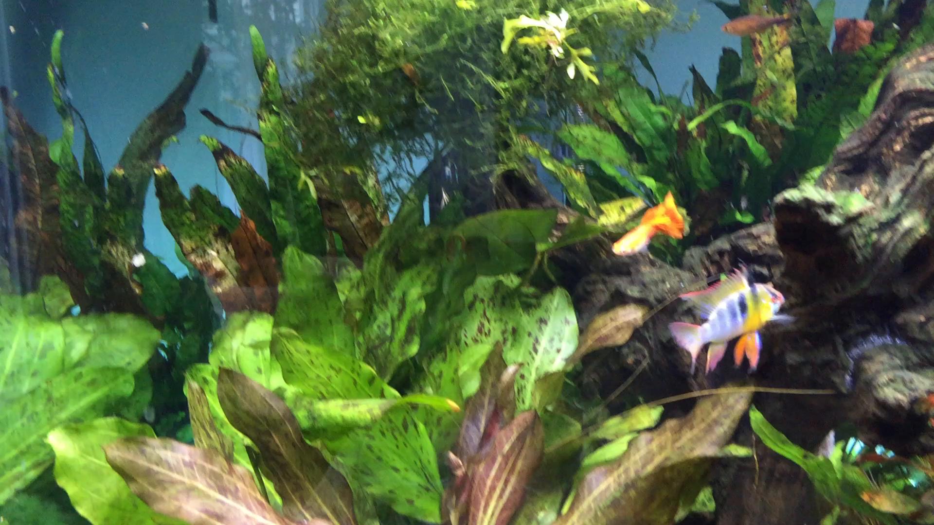 Amazon Seachem Flourish Potassium 500ml Aquarium Treatments