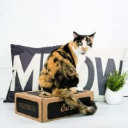 CatLadyBox - Subscription Box for Cat Ladies: Basic - Small