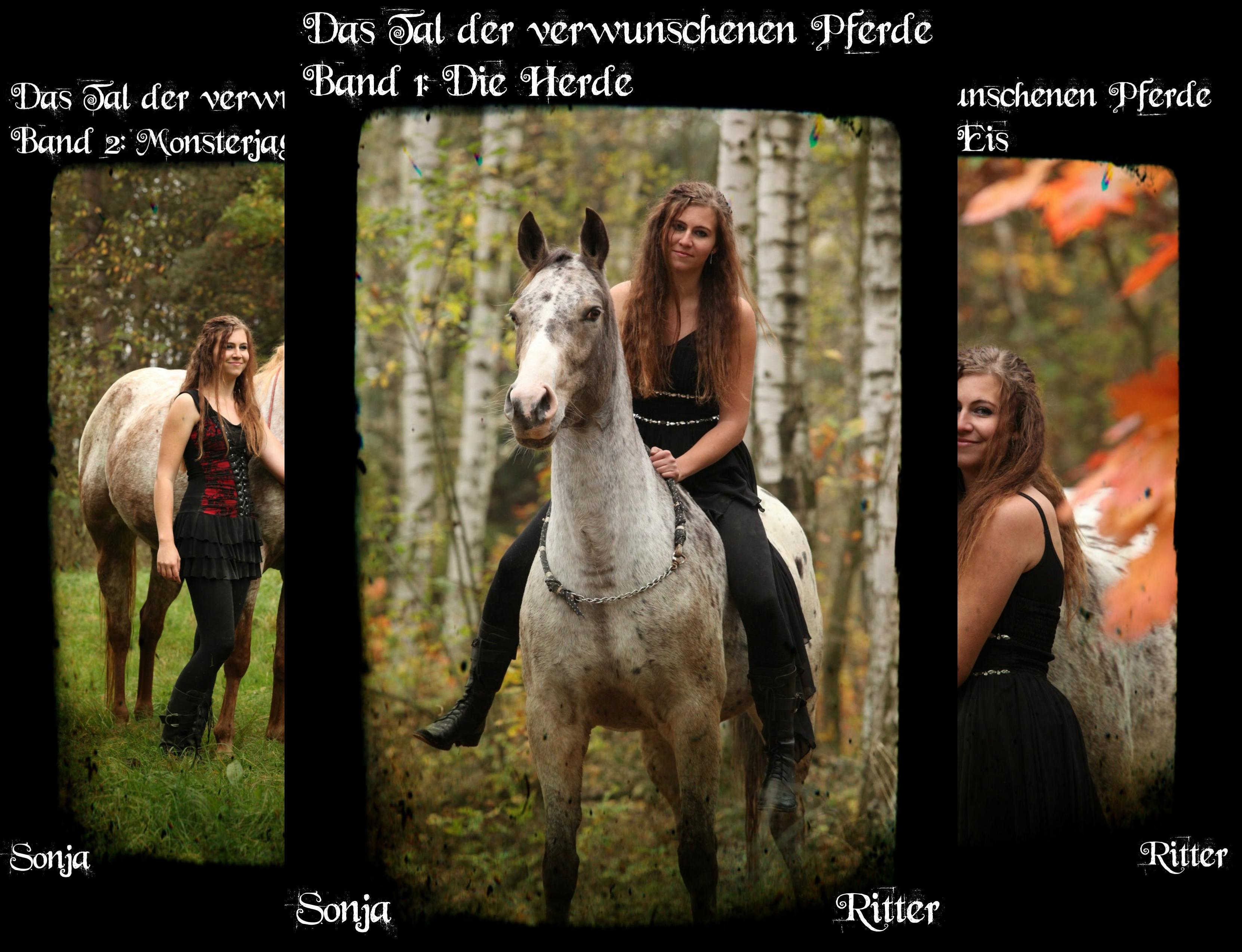 Das Tal der verwunschenen Pferde (Reihe in 7 Bänden)