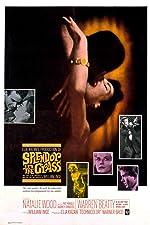 Splendor in the Grass(1961)