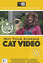 Not Your Average Cat Video