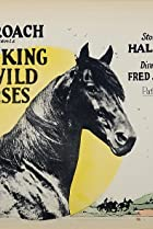 Image of The King of Wild Horses