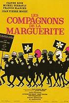 Image of Les compagnons de la marguerite