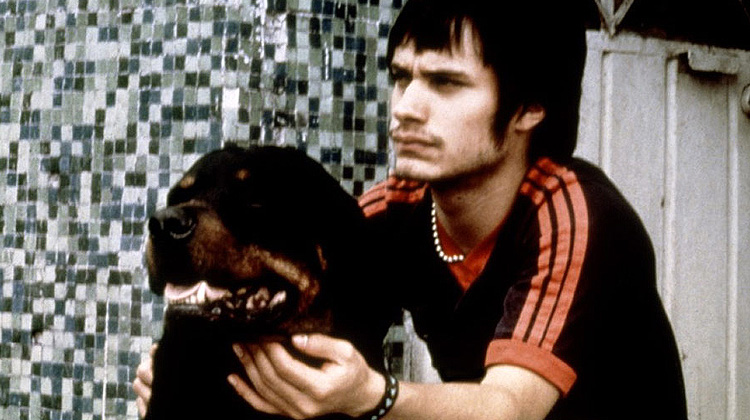 Image result for amores perros