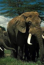 Echo and the Elephants of Amboseli Poster
