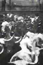 Image of Cattle Driven to Slaughter