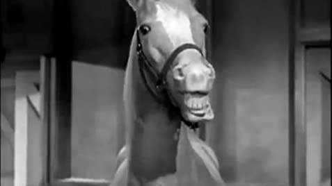 Mister Ed (tv Series 19581966)  Imdb. Fha Loan Requirements California. Cisco Unified Communications Manager Administration Guide. Family Law Attorney Birmingham Al. History Channel On Cable Static Code Analysis. Business Management Current Events. Home Safety And Security Arizona Art Colleges. Security Benefit Secure Income Annuity. Medicare Plans Comparison Castle Hill Storage