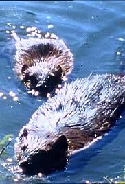 Beaver Dam Poster