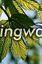 Image of Springwatch
