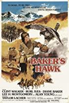 Image of Baker's Hawk