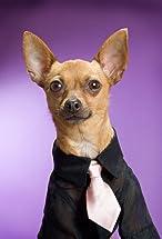 Eli the Chihuahua's primary photo