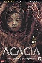 Image of Acacia