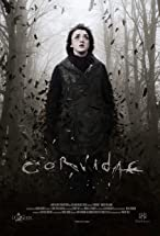 Primary image for Corvidae