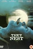 Image of They Nest
