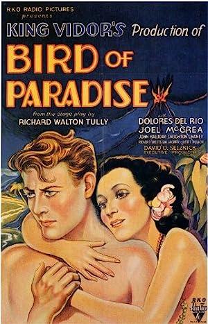 El Ave del Paraíso: Un Seductor con Alas -