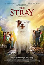 The Stray DVDRip(2017)
