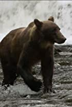 Image of Nature: Fortress of the Bears