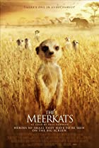 Image of The Meerkats