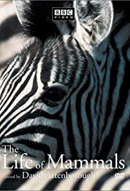The Life of Mammals Poster