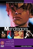 Image of Mandragora