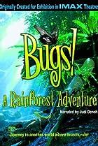 Image of Bugs!