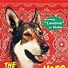 London in The Littlest Hobo (1979)