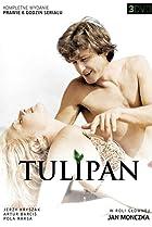 Image of Tulipan