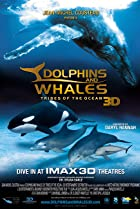 Image of Dolphins and Whales 3D: Tribes of the Ocean