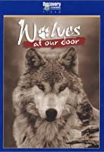 Wolves at Our Door