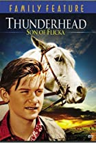 Image of Thunderhead - Son of Flicka