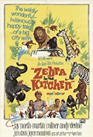 Zebra in the Kitchen(1965) Poster - Movie Forum, Cast, Reviews