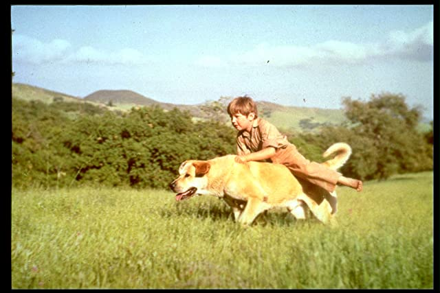 Kevin Corcoran and Spike in Old Yeller (1957)