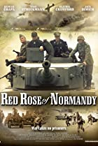 Image of Red Rose of Normandy