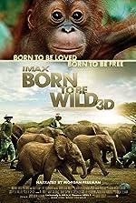 Born to Be Wild(2011)