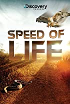 Image of Speed of Life