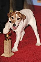 Image of Uggie