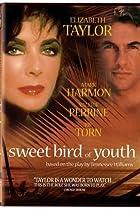 Image of Sweet Bird of Youth