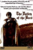 Image of Valley of the Bees