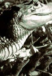 Crocodile Vs. Wildebeest Poster