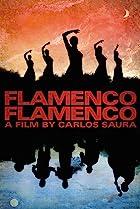 Image of Flamenco, Flamenco