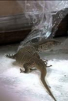 Image of Duck Dynasty: Here Lizard, Lizard