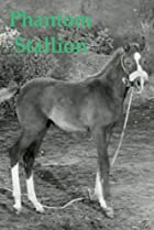 Image of Phantom Stallion