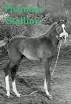 Primary image for Phantom Stallion