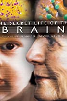 Image of The Secret Life of the Brain
