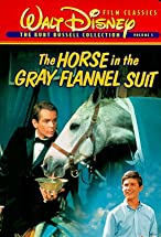 Primary image for The Horse in the Gray Flannel Suit