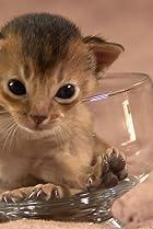 Image of Too Cute!