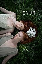 Image of Ovum