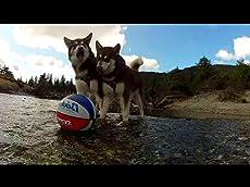 Skadi & Freya - Its a Dogs Life!